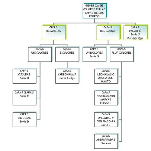 Oganigrama genetica color